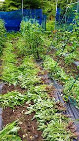20180706野菜畑の草取り後の様子1