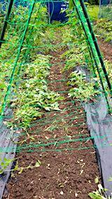 20180706野菜畑の草取り後の様子3