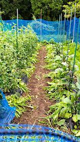 20180706野菜畑の草取り後の様子4