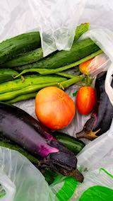 20180706今日収穫した野菜