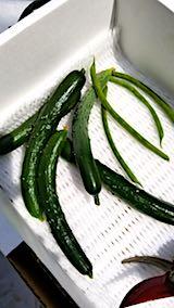 20180709収穫した野菜