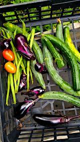 20180718今日収穫した野菜