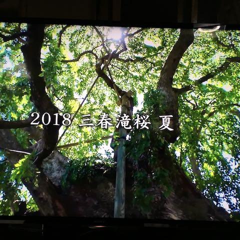 20180904三春滝桜2018夏