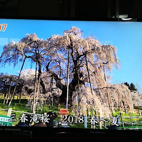 20180904三春滝桜2018春から夏1