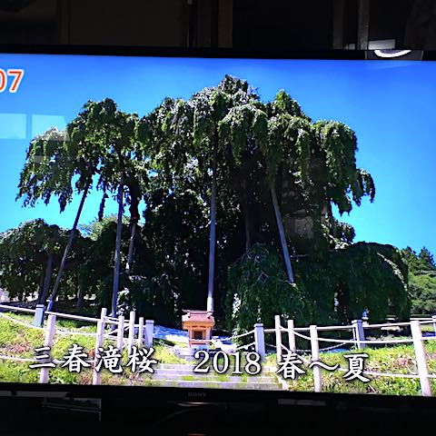20180904三春滝桜2018春から夏2