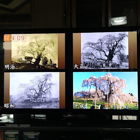 20180904三春滝桜明治大正昭和平成
