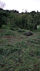 20180911栗畑の下草刈り後の様子6