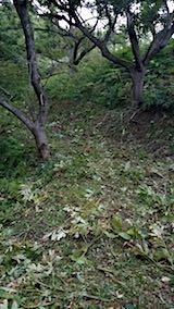 20180912栗畑の下草刈り後の様子5