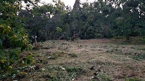 20180912栗畑の下草刈り後の様子8