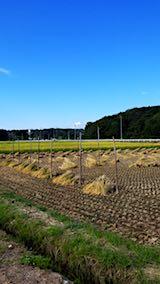20180915山へ向かう途中の様子田んぼの稲刈り1