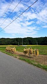 20180915山へ向かう途中の様子田んぼの稲刈り2