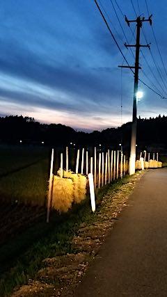 20180915山からの帰り道の様子田んぼ1