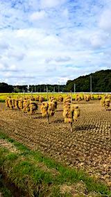 20180916山へ向かう途中の様子田んぼの稲干し
