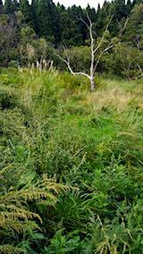 20180916栗畑の草刈り前の様子2