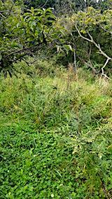 20180916栗畑の草刈り前の様子4