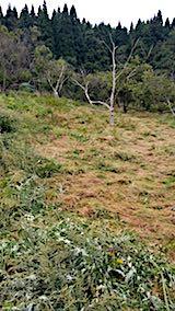 20180916栗畑の草刈り後の様子2