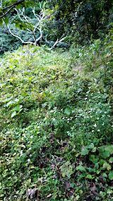 20180928栗畑の下草刈り前の様子1
