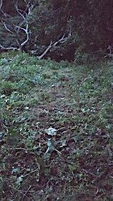 20180928栗畑の下草刈り後の様子1