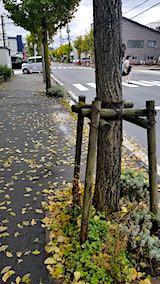 20181012外の様子朝歩道2