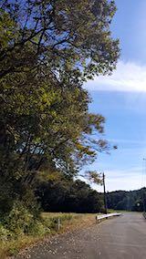 20181013山へ向かう途中の樹木の様子