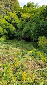 20181014セイタカアワダチソウの草刈り後の様子3