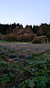 20181022ラベンダーの畑