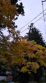 20181104伊佐須美の杜の紅葉1