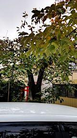 20181105柿の木の葉っぱ2