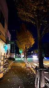 20181107外の様子夕方イチョウの紅葉4