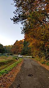 20181108山へ向かう途中の様子峠道の紅葉