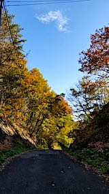 20181108山からの帰り道の様子峠道の紅葉1