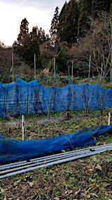 20181205野菜畑の撤去作業前1