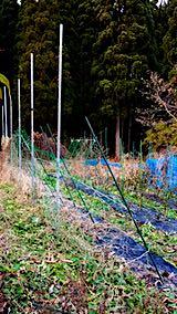 20181205野菜畑の撤去作業前2