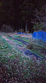20181205野菜畑の撤去作業後1