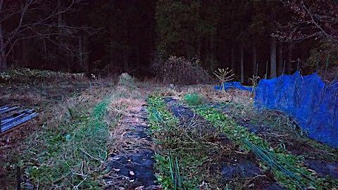20181205野菜畑の撤去作業後2