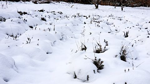 20181211雪で隠れてしまったラベンダー畑の様子5