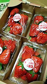 20190109会津から届いたイチゴ