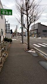 20190112雪解けが進んだ歩道や道路1