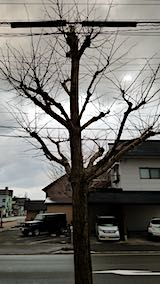 20190313外の様子夕方