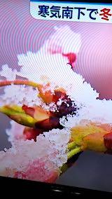 20190402NHKテレビ富山では桜に雪が1