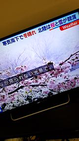 20190402NHKテレビ富山では桜に雪が2