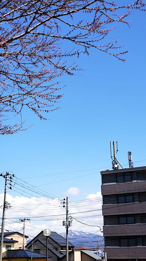 20190412速歩途中の公園高台から望んだ太平山とケヤキの新芽