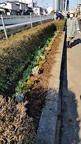 20190414町内会でラベンダーの植栽作業7