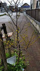 20190415速歩からの帰り道で望んだ樹木の新芽