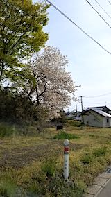 20190506山へ向かう途中の桜
