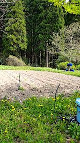 20190506野菜畑