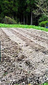 20190507野菜畑作り1