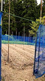 20190514野菜畑の屋根用ネットの支柱立て作業1