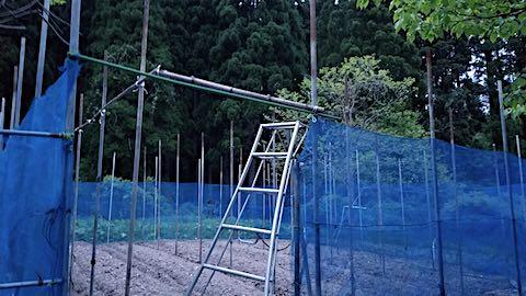20190514野菜畑の屋根用ネットの支柱立て作業終了1