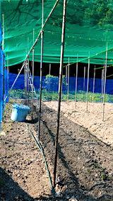 20190517野菜畑の屋根用ネット張り作業前1